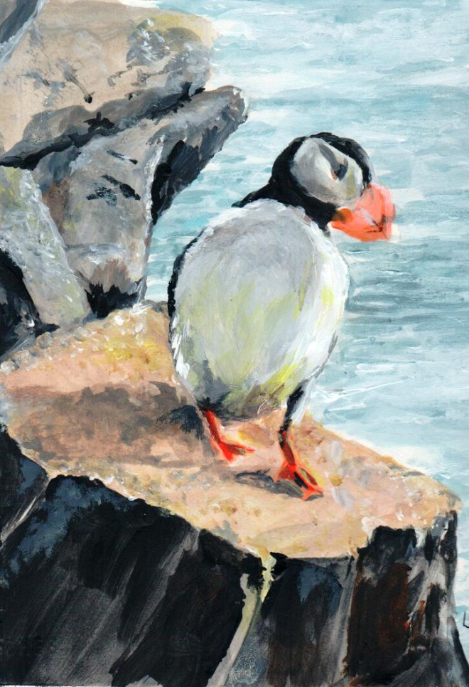 horned-puffin-16