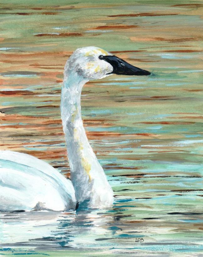 trumpeter swan 16.jpg